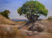 China Camp State Park tree seascape oil painting