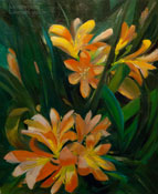 clivia lily kafir lily painting