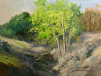 Hillside Sycamores