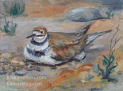 Kildeer nesting oil painting from life by Karen Winters