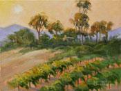 Montecito Hillside vineyard