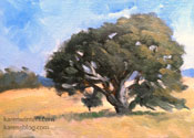 Oak tree study oil painting California landscape art