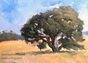 Oak tree study oil painting California landscape art