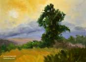 One Golden Moment Eucalyptus Los Osos Valley Road oil painting