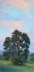 Reaching for the Sunset Los Olivos Oak Wine Country Oil Painting by Karen Winters