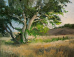 Sycamore Breezes Paso Robles sycamore ranch central coast california oil painting by karen Winters