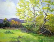 Newbury Park sycamore tree oil painting Santa Monica Mountains California impressionist landscape Karen Winters