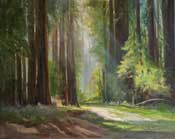 Trail of the titans California Coastal Redwoods Painting - Muir Woods