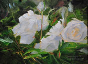 White Roses oil painting botanical study 6 x 8 inches oil floral painting by Karen Winters