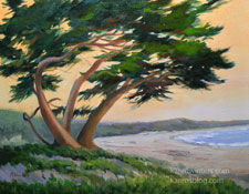 Windblown Cypress on the Bay 11 x 14 oil painting